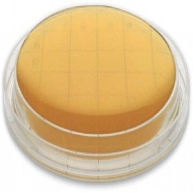Soyabean Casein Digest Agar (SCDA) With β-Lactamase II  55 Mm Contact Plate