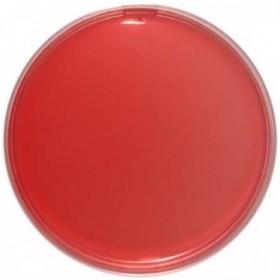 Sheep Blood Agar (5% Sheep Blood) 90 Mm
